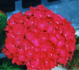 Популярные цветы  Про ЦВЕТЫ рф  фото цветов и букетов
