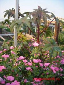 Вятские сады