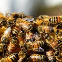С чего начать, если вы хотите завести пчел