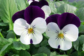 Самые популярные растения в вашем саду