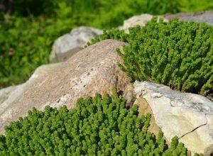 Место камня в ландшафтном дизайне